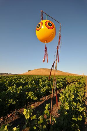 Ballon over een veld van wijndruiven te schrikken vogels
