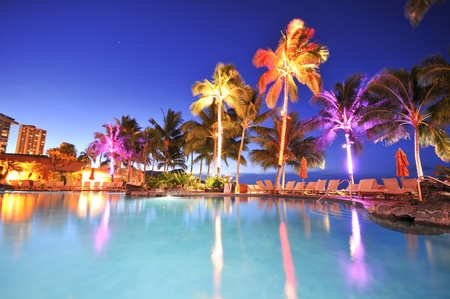 palm: Palm trees reflect in a swimming pool at night time. Stock Photo