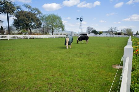 fenced in: Covered horses eats grass in a pasture near a house fenced in