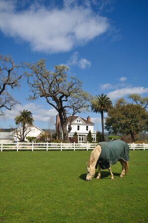 fenced in: Covered horse eats grass in a pasture near a house fenced in
