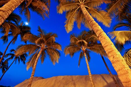 Palm trees and the moon above a sandy beach Stock Photo