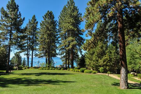 Grass field with pine trees and a clear lake behind them Stok Fotoğraf - 14952450