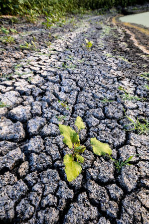 Cracked dry ground near a pond with a single green plant breaking through