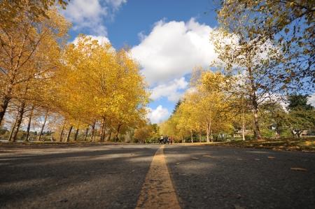 Bomen rondom een wandelpad met herfst kleur bomen Stockfoto