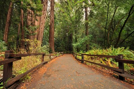 Wooden fence along a forest walkway photo