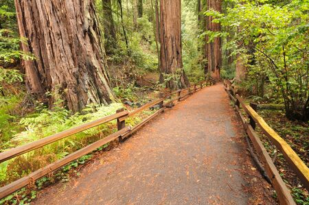 Wooden fence along a forest walkway Stock Photo - 16378692