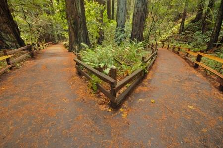 Twee paden leiden naar verschillende richtingen