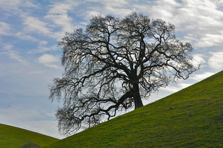 Green field with a large oak tree on a hill  photo
