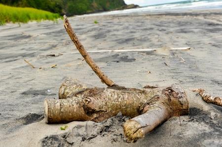 phallic: Un poco de madera en una playa parece una figura humana