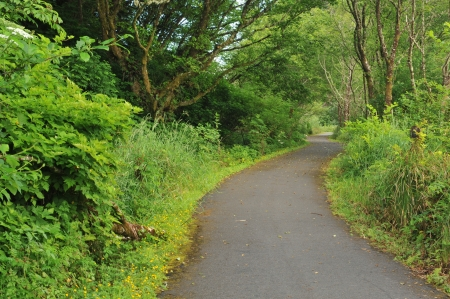 walking trail: Una foresta circonda un sentiero lastricato a piedi