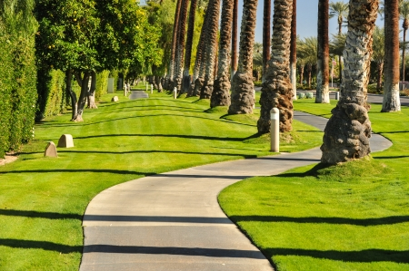 walking path: Tall rows of palm trees line a walking path Stock Photo