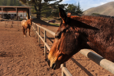 fenced in: Horses in a fenced in area outdoors Stock Photo