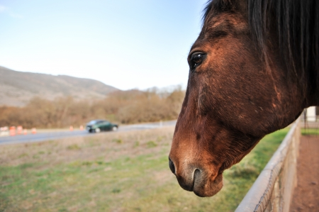 fenced in: Close up of a horse in a fenced in area outdoors