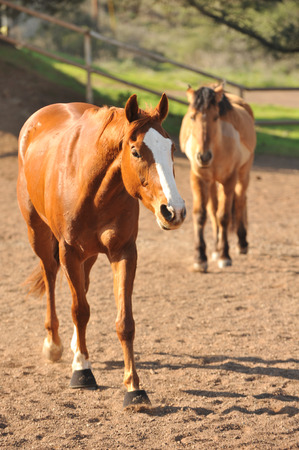 corral: Dirt corral with many horses inside Stock Photo
