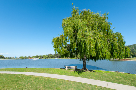 grass area: Round grass area near lake with willow tree