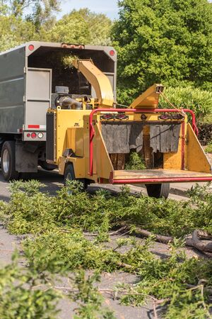 Large branches from a Redwood tree are fed into a wood chipping machine