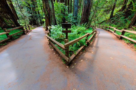 path ways: A walking path in a forrest splits and leads two different directions