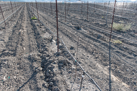 lack of water: Empty vinyard with no grapes because of lack of water Stock Photo