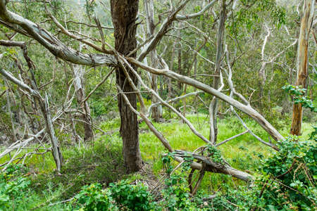 many branches: Many branches of trees with ivy and bushes in a forest