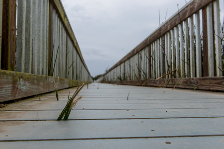 slits: Low angle view of a bridge with rails near the Pacific Ocean over a lake with reeds growning through slits