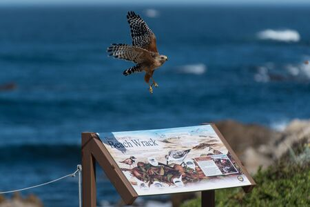 wrack: A Beach Wrack sign on the Pacific Coast under a hawk taking flight