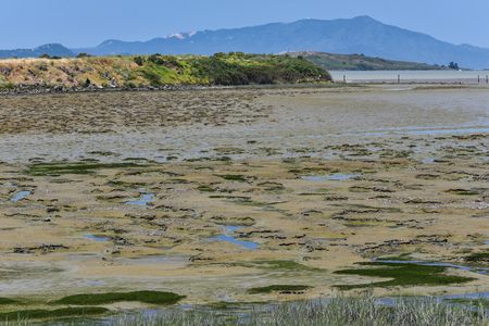 Pockets of water in a tidel flat of mud with Mt Tamalpais in background. Stock Photo