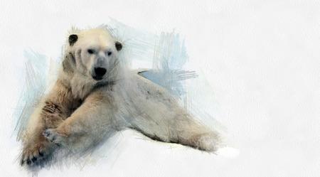 북극곰의 이미지입니다.