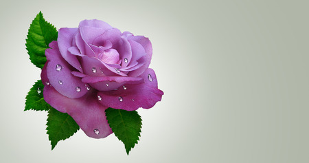 Flower rose with leaves.