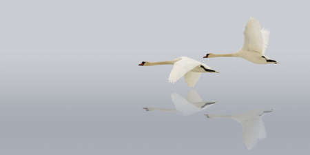 espejo: Flying swans on the water surface.