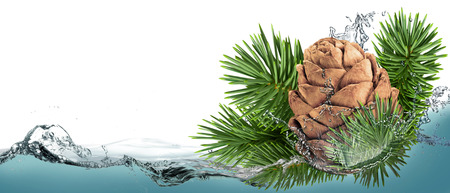 pine kernels: Pine cones with a branch in a spray of water.