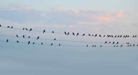 Volée d'oiseaux migrateurs assis sur des fils