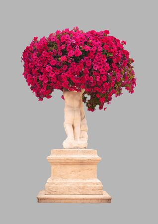 Red petunia flowers in a decorative design on a transparent background 写真素材