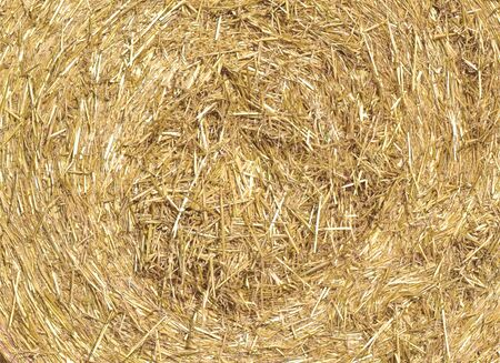 Texture of collected dry straw for livestock feed. 写真素材