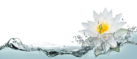 Opened lotus flower in a spray of water.