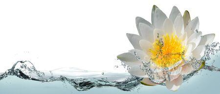 Blossom lotus flower in spray of water.