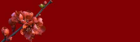 Banner for a site with flowers of pomegranate plants.