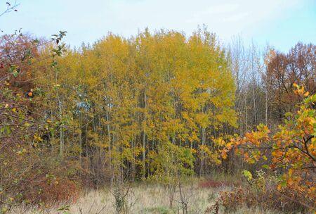 European daytime forest in autumn in October.