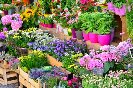 colorful illustration of different flowers at a store illustration