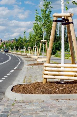 developed: carretera de reciente desarrollo con �rboles plantados a lo largo