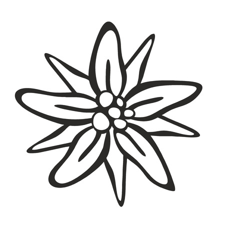 schematic illustration of a protected edelweiss blossom illustration