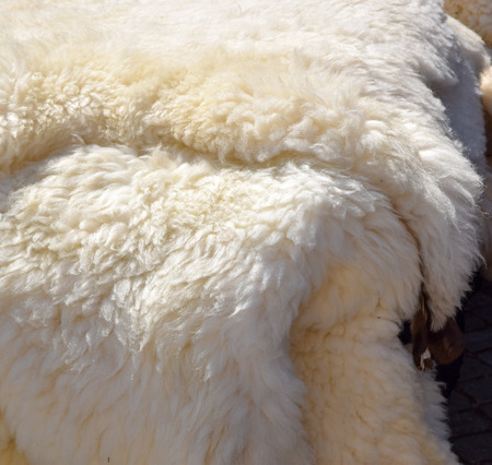 some cozy sheepskins on display for sale