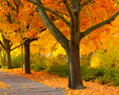 fall landscape: fall landscape with colorful trees and leaves