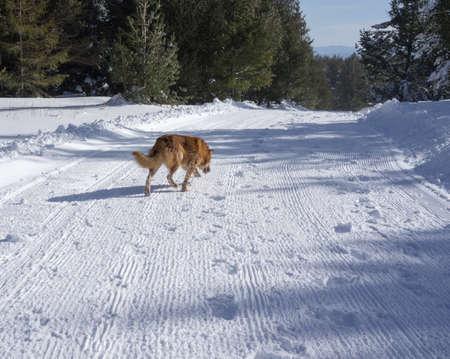 Snow and dog