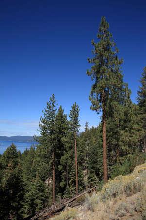 mountainside: Lake Tahoe Stock Photo