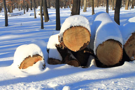 sawed: Wood pile in snow - Sawed logs on a sunny day in winter.