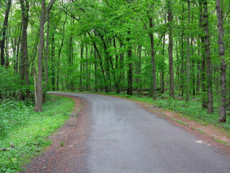 Green Forest Path - Road through a dark green woods landscape. Stock Photo