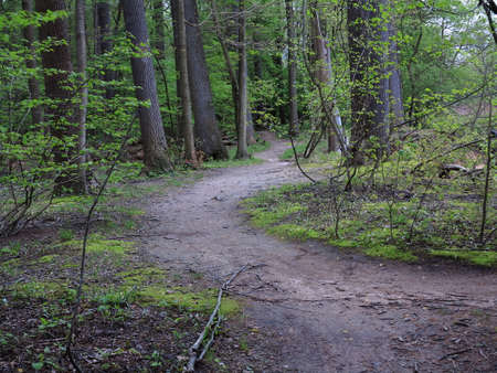 Green Forest Path - Trail through a dark green forest landscape. Stock Photo