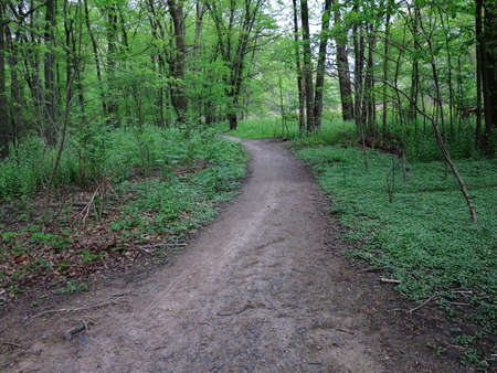 Green Forest Path - Dirt road through a forest landscape.