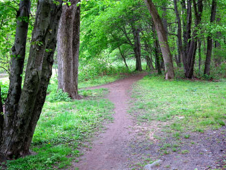 Green Forest Path - Trail through a woodland  landscape.