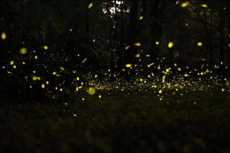 fireflies fly at grass of Nanjing, China.